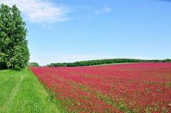É um campo vermelho. Imagem de Stock