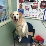 É um dia ensolarado nos veterinários Imagem de Stock