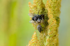 É uma aranha come o mundo da mosca lá fora Imagem de Stock