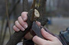 Ébarbage des buissons avec un couteau photo libre de droits