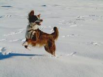 Ébats de neige Image libre de droits