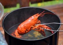 Ébullition de homard avec le plan rapproché de homard images stock