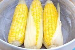 Ébullition de maïs dans un bac Image stock