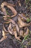 Écaillements de pomme de terre images stock