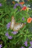 Écart d'ailes Photographie stock libre de droits