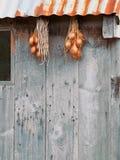 Échalotes traînées pour sécher images libres de droits