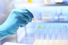 Échantillon d'urine d'égoutture d'assistant de laboratoire pour l'analyse de la pipette dans le tube à essai images stock