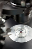 Échantillon de laboratoire sous le microscope Images libres de droits