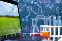 Échantillon de témoin génétique de scientifique d'amélioration de blé image stock