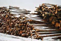 Échantillons d'arbres de sawing sous la neige Photographie stock