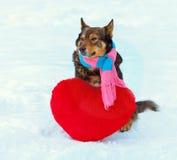 Écharpe de port de chien Images libres de droits