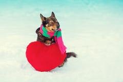 Écharpe de port de chien Image stock