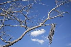 Écharpe et arbre Images stock
