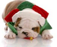 Écharpe s'usante de Noël de chiot Photos stock