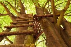 Échelle à la cabane dans un arbre Photos stock