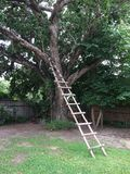 Échelle d'arbre Photo libre de droits
