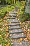 Échelle en pierre en stationnement d'automne Photo libre de droits