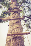 Échelle faite en bois et corde atteignant dans le haut arbre vert r Photos stock