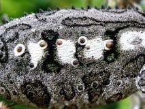 Échelles de caméléon image stock