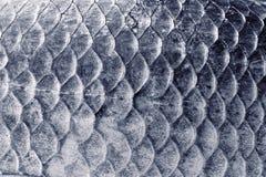 Échelles de carpe de Crucian, texture naturelle, modifiée la tonalité photographie stock libre de droits
