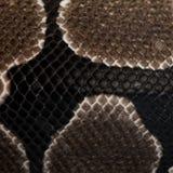Échelles de fondation royale de serpent de python Images libres de droits