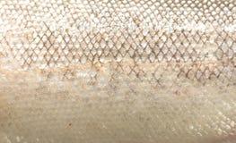 Échelles de poissons Photos stock