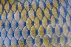 Échelles de poissons Photo stock