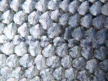 Échelles de poissons Image stock