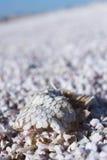 Échelles de poissons en mer de salton Image libre de droits