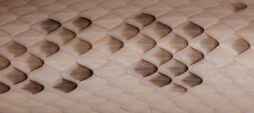 Échelles de serpent de rat noir image stock