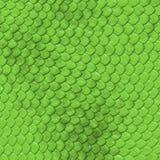 Échelles de vert Photos stock
