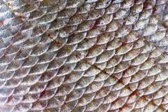 Échelles des poissons Photos libres de droits