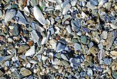 Échouez la surface couverte d'interpréteurs de commandes interactifs cassés de mer le long du littoral de Laguna Beach. Image libre de droits