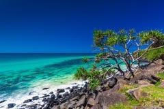 Échouez la vue avec des roches et un arbre dans des têtes de Burleigh, Australie Images stock