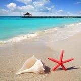 Échouez les étoiles de mer et le seashell sur le sable blanc images stock