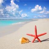 Échouez les étoiles de mer et le seashell sur le sable blanc images libres de droits