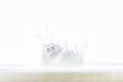 Éclaboussement du fantôme de lait Photos libres de droits
