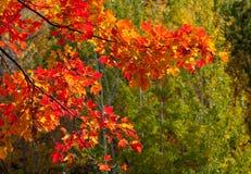 Éclaboussure d'automne Image libre de droits