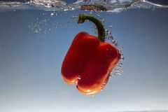éclaboussure d'eau douce sur le poivron doux rouge sur le fond bleu photo stock