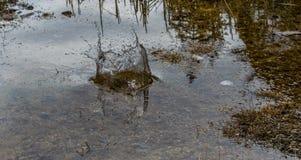 Éclaboussure de l'eau dans l'environnement naturel images stock