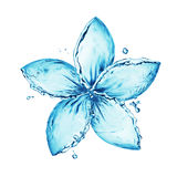 Éclaboussure de l'eau, fleur Photo libre de droits