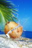 Éclaboussure tropicale Images libres de droits