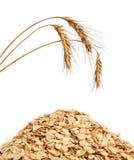 Éclailles et blé de céréale images libres de droits