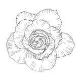 Éclair de tatouage de Blackwork Rose Flower Illustration fortement détaillée d'isolement sur le blanc Photo stock