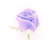 Éclairage abstrait de fleur rose avec la gouttelette Images libres de droits