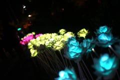Éclairage de fleur Photographie stock libre de droits