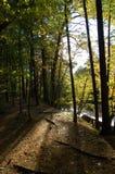 Éclairage de forêt Photo stock