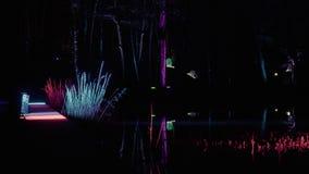Éclairage de forêt dans le mauvais lippspringe de parc clips vidéos