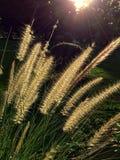 Éclat de lumière de matin sur des fleurs Photos libres de droits