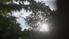 Éclat de lumière du soleil par les feuilles banque de vidéos